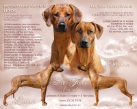 K-litter Rhodesian Ridgeback puppies, Ele Tori kennel