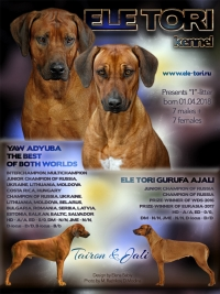 I-litter Rhodesian Ridgeback puppies, Ele Tori kennel