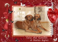 V-litter Rhodesian Ridgeback puppies, Ele Tori kennel