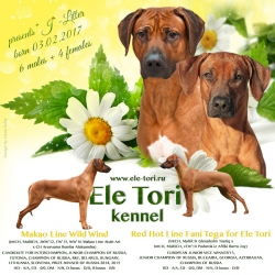 Rhodesian ridgeback puppies, Ele Tori kennel